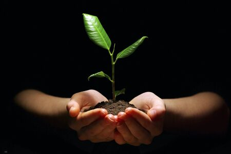 earth moving: Hands holding sapling in soil on black Stock Photo
