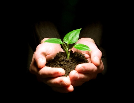 hand holding plant: Hands holding sapling in soil on black Stock Photo