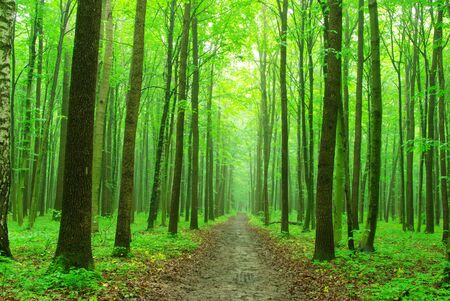 a path is in the green forest  photo