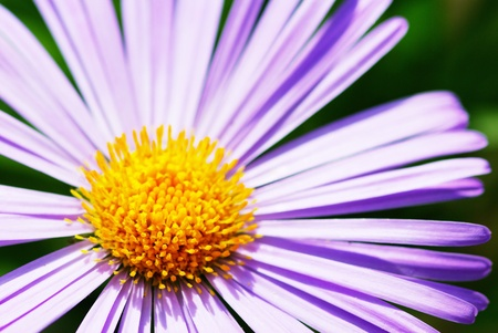 Image of beautiful  violet flower