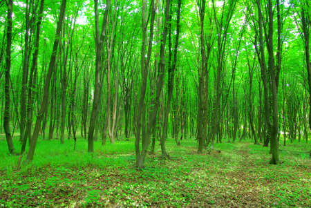 green forest background in a sunny day photo