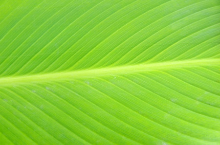 Texture of a green leaf as background Stock Photo