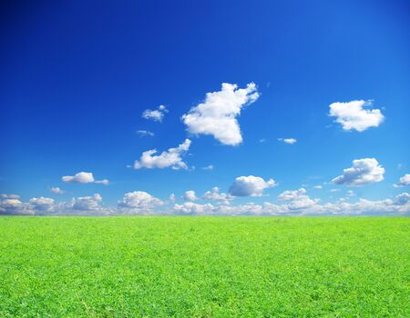 field on a background of the blue sky photo