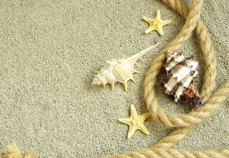compas: starfish and shells in rope on sand