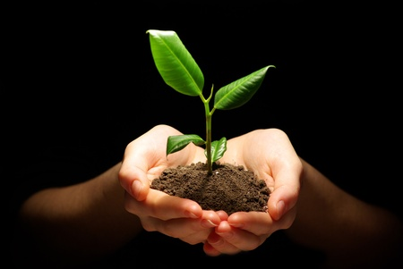 hands of light: Hands holding plant in soil on black Stock Photo