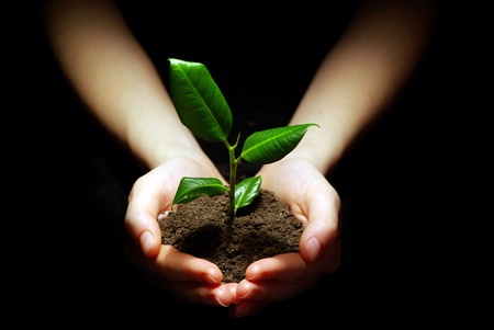 sustain: Hands holding plant in soil on black Stock Photo