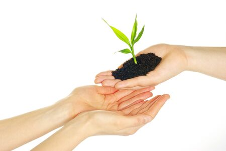 plant in hands isolated on white background photo