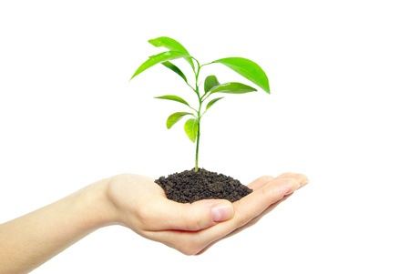 small plant: plant in female hands isolated on white background