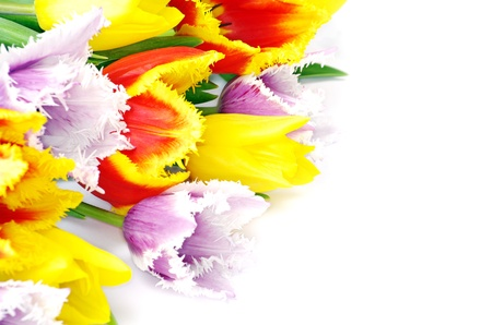 bouquet of the tulips on white background photo