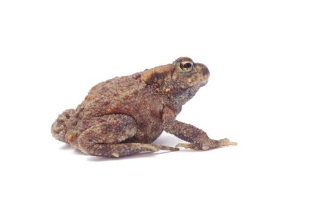 frog on a white background Stock Photo - 11141343