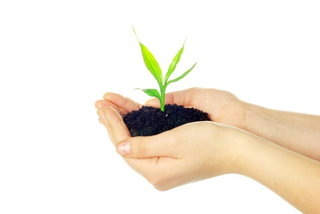 plant in female hands isolated on white background photo