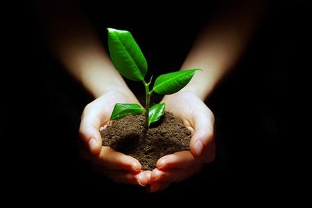 pflanze wurzel: H�nde halten Pflanze im Boden auf schwarz