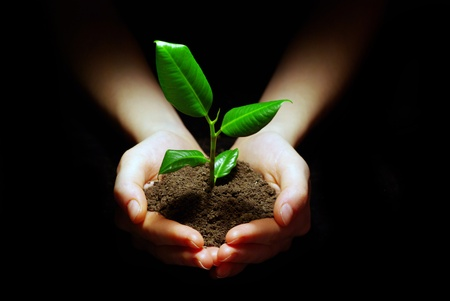 Hands holding plant in soil on black Stock Photo