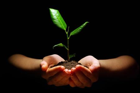 Hände halten Pflanze im Boden auf schwarz