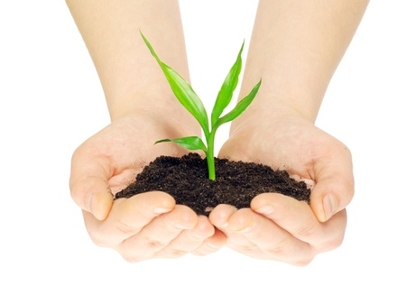 plant in hands isolated on white photo