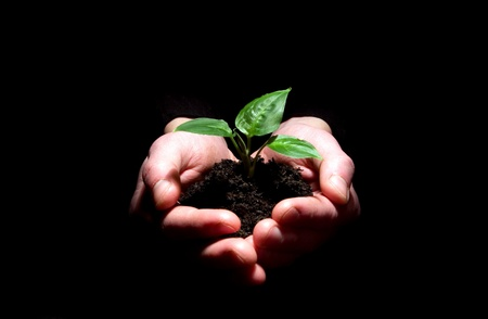 replant: Hands holding plant in soil on black Stock Photo