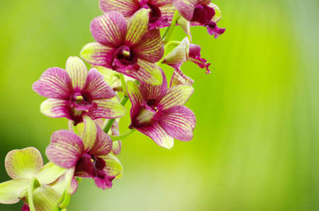 beautiful orchid on green background Stock Photo - 12792296