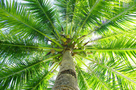 foreshortening: palm trees on blue sky