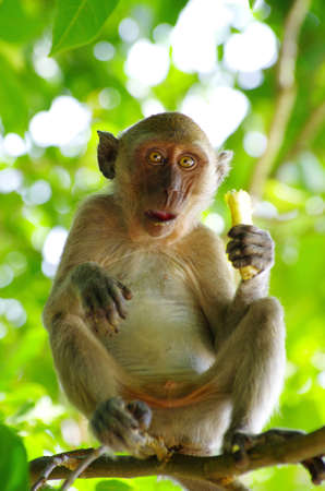monkey sitting on the tree Stock Photo - 12792817