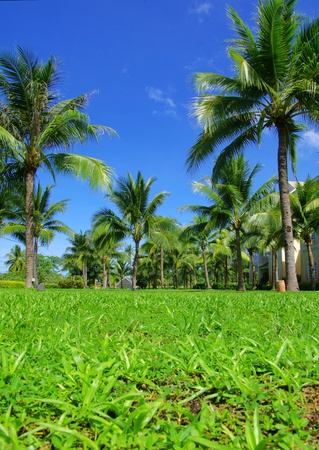 Green palm tree on blue sky background Stock Photo - 12982650