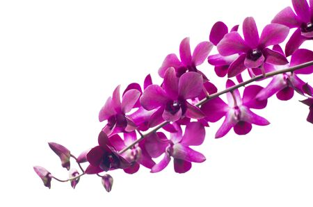 beautiful orchid on white background photo