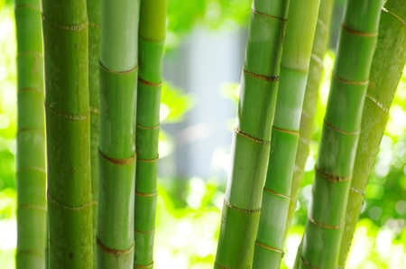 Bamboo isolated on a green Stock Photo - 12982576