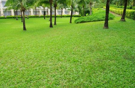 Garden stone path with grass