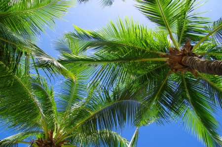 on palm tree: Green palm tree on blue sky background