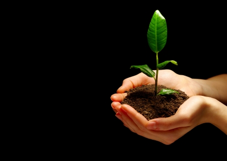 nurture: Hands holdings a little green plant