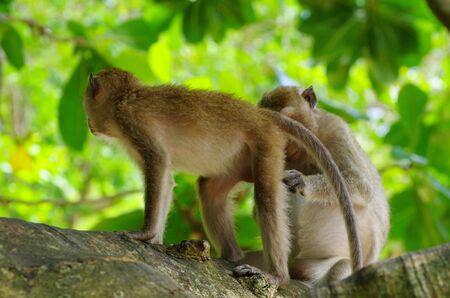 monkey sitting on the tree photo