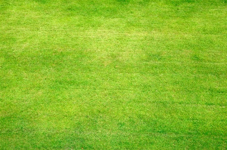 background textures: Close-up image of fresh spring green grass