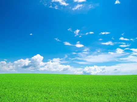 field on a background of the blue sky Stock Photo - 13732695