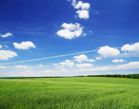 field on a background of the blue sky Stock Photo - 13978117