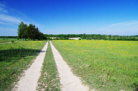 field on a background of the blue sky Stock Photo - 14370605