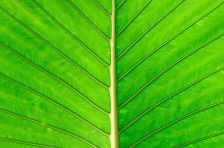 leaf of a plant close up photo