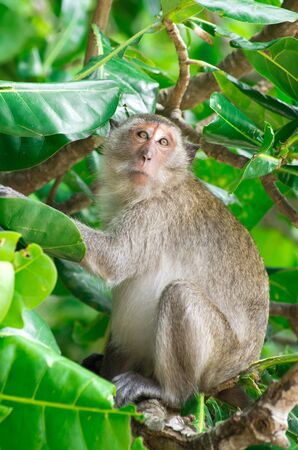 monkey sitting on the tree Stock Photo - 14733751
