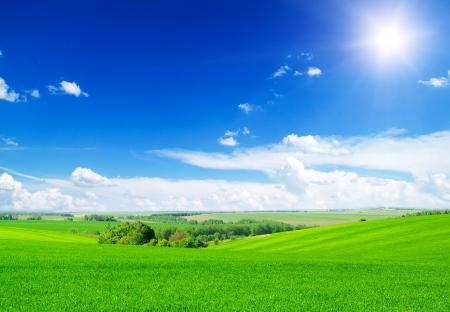 dia soleado: campo verde y cielo azul