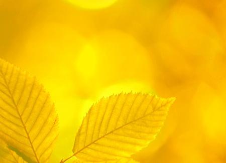 autumn leaves Stock Photo - 15220470