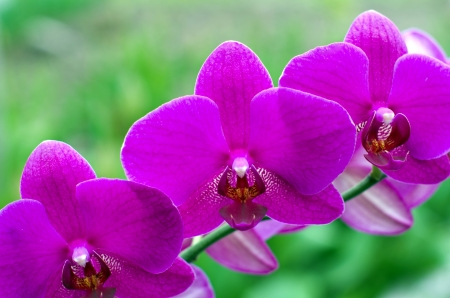 beautiful orchid on green background Stock Photo