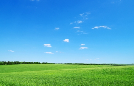 green field: green field and blue sky