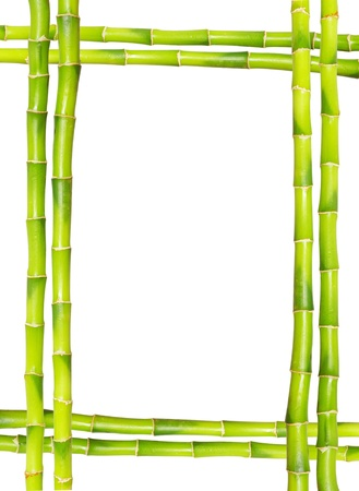Bamboo frame made of stems photo