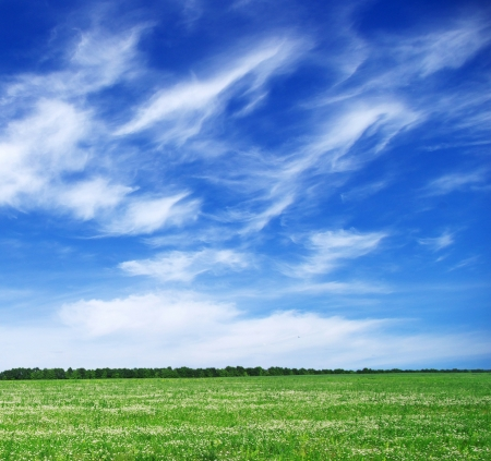 green field and blue sky Imagens