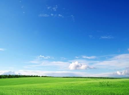 himmel mit wolken: grünen Wiese und blauer Himmel Lizenzfreie Bilder