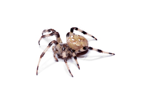 extreme angle: spider on a white background Stock Photo