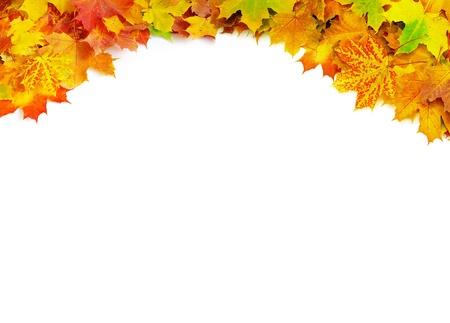hojas secas: el oto?o de hojas de arce aislado en blanco