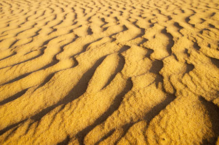 Gold desert into the sunset. Sand texture. photo