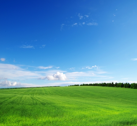 landscape: 綠色的田野和藍色的天空 版權商用圖片