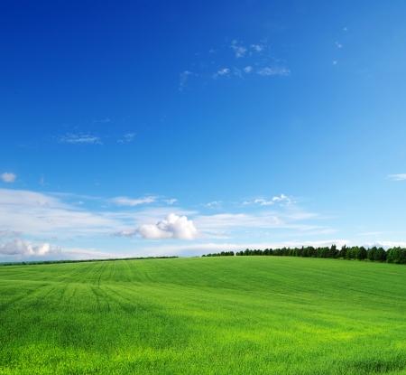 champ vert et bleu ciel Banque d'images