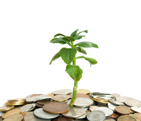 Coins and plant isolated on white background photo