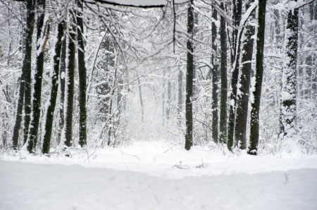 beautiful winter forest  and the road Stock Photo - 16819497